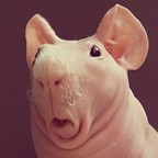 Gerard's avatar