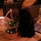Miep Miepje's profielfoto